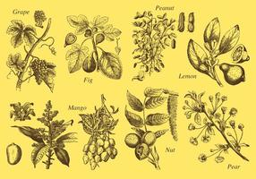 Dibujo de estilo antiguo árboles frutales vectores