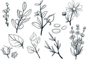 Cosmetic-herbs-vectors
