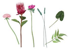 Målad blomma vektor uppsättning