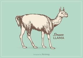 Free Llama Vector Illustration