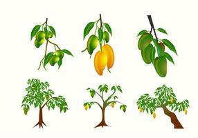 Vectores de planta de mango