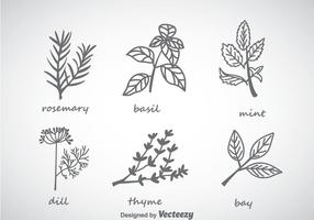 Herbs And Spices Collection Vector