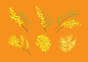 Mimosa Vector