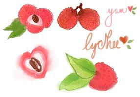 Conjunto de vetores de Lychee de aquarela