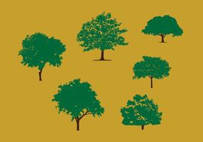 Mango Tree Vector Pack