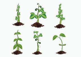 Growing Beanstalk Vector