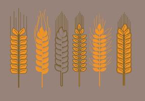 Vectores de tallo de trigo