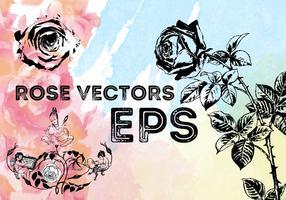 Vecteurs de roses libres