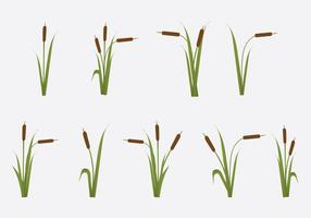Free Reeds Vector Illustration