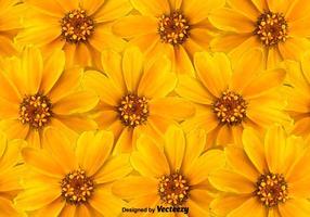 Fondo amarillo de las flores del vector