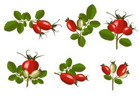 Isolated Rosehip Vector