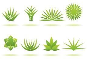 Maguey Logos vector