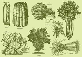 Old Style Drawing Vegetables vector