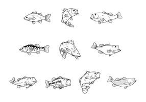 Free Bass Fishes Vector