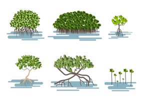 Vector de mangrove gratuit