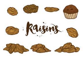 Vecteurs de raisins secs