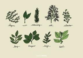 Hand Drawn Herb Vectors