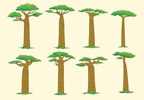Arbol del baobab