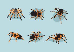 Verschiedene Tarantula Vektor