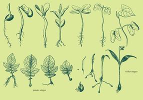 Vector crecen las plantas