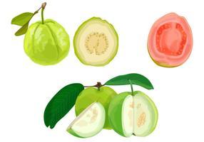 Guava illustratie