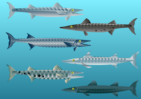 Livre Barracuda Fish Vector