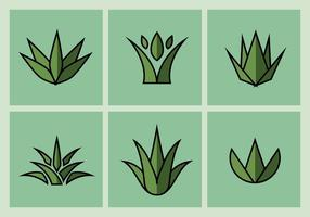 Maguey Vector Illustrationer