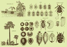 Cresça insetos e plantas vetor