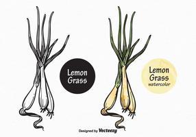 Libre vecteur citron herbe