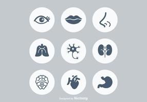 Freie menschliche Anatonomie Vektor Icons