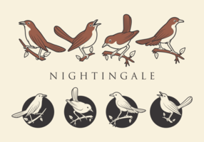 NIGHTINGALE VEKTOREN