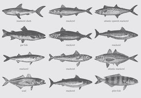 Mackerel Drawings vector