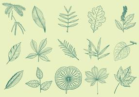 Leaves Drawings vector