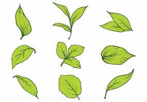 Conjunto de iconos de hojas