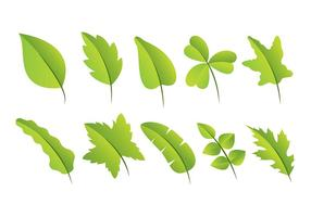 Pack de feuilles vector