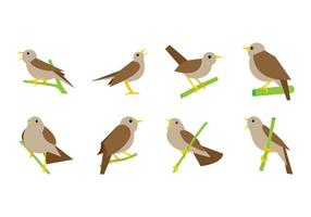 Vector Nightingale gratis
