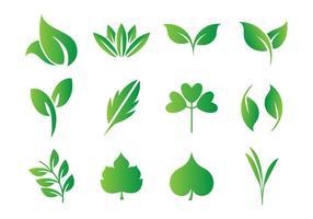 Leaf, Hojas Vector