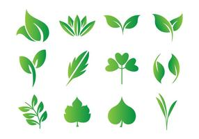 Feuilles libres, feuilles vector