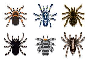 Kostenlose Tarantula Vektor