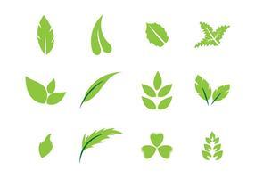 Folhas vector 2