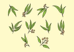 Freier Eukalyptus-Vektor