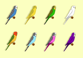 Free Budgie Vector