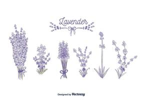 Lavendelvektor