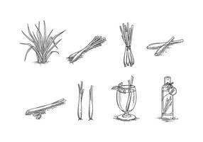 LEMONGRASS SKETCH VECTOR FREE