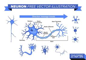 Neuron Gratis Vektor Illustration