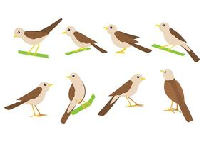 Nightingale Bird Vector Ikoner
