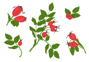 Vecteurs de roseaux