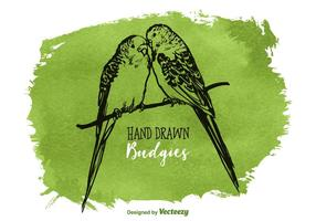 Free Vector Drawn Budgies