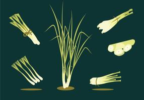 Lemongrass Herbs Vector