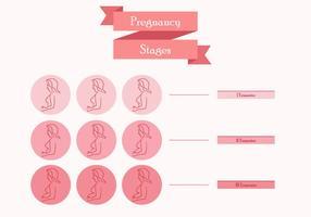 Estágios da mãe grávida